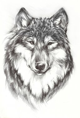 Black painted wolf