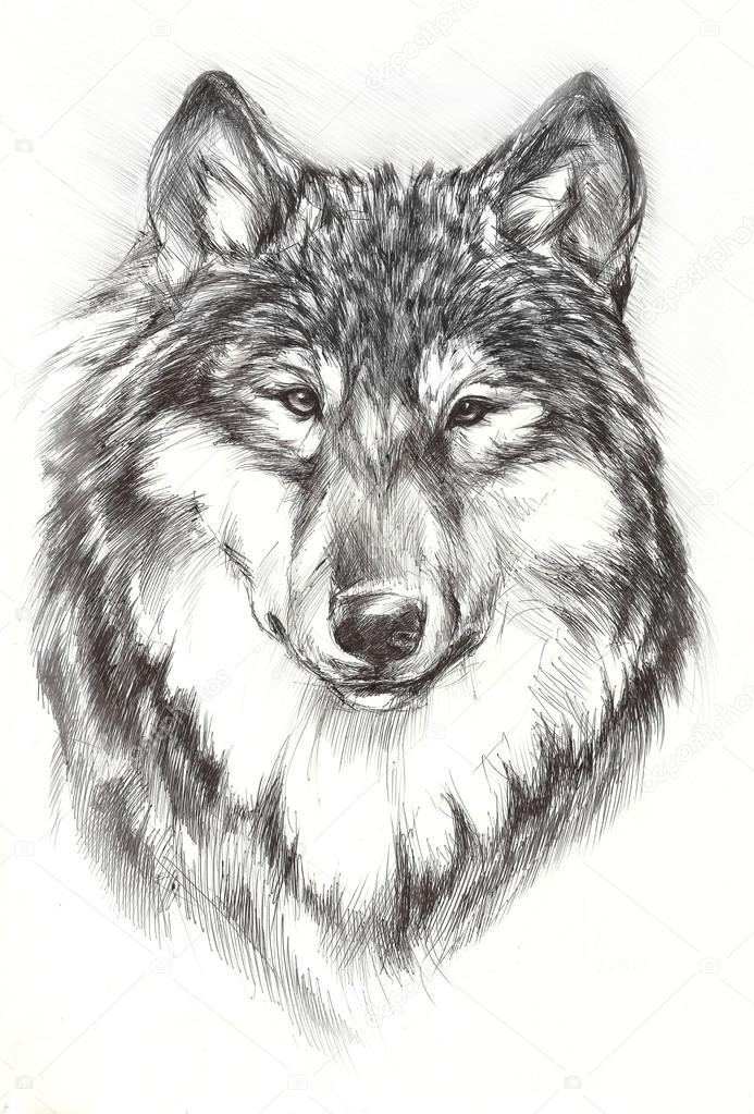 Wolf Face Paint Ideas Black Painted Wolf Stock Photo C Tig A Bk Ru 113656328