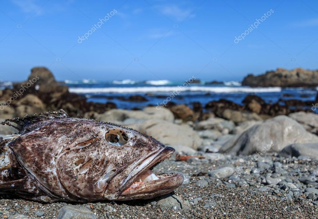 Dead Fish on a California Coast