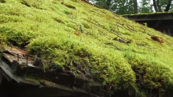 Romania. Bran. Old grass houses.