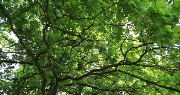 Nature. Tree. Up-to-down panorama.
