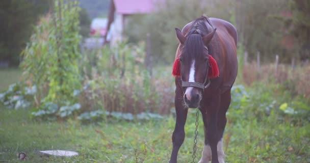 Kůň se těší