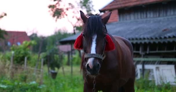 Kůň stojí. Detail