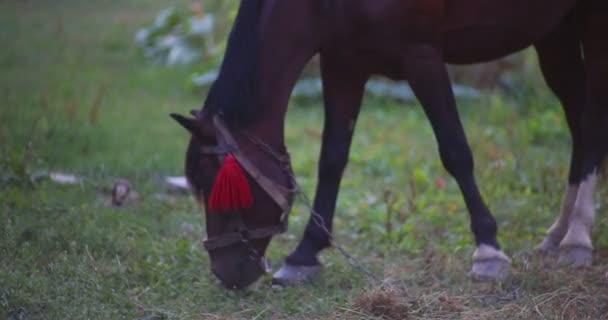 koně jíst trávu