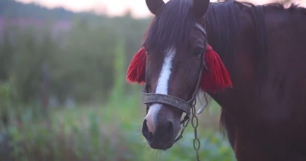 Kůň se těší a pak jíst trávu. Detail