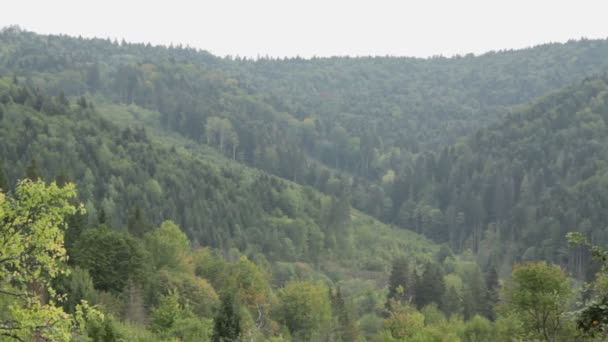 Carpathian mountains. Mountain forest.
