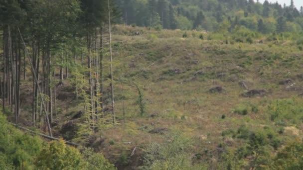 Karpaty. Horský lesní.