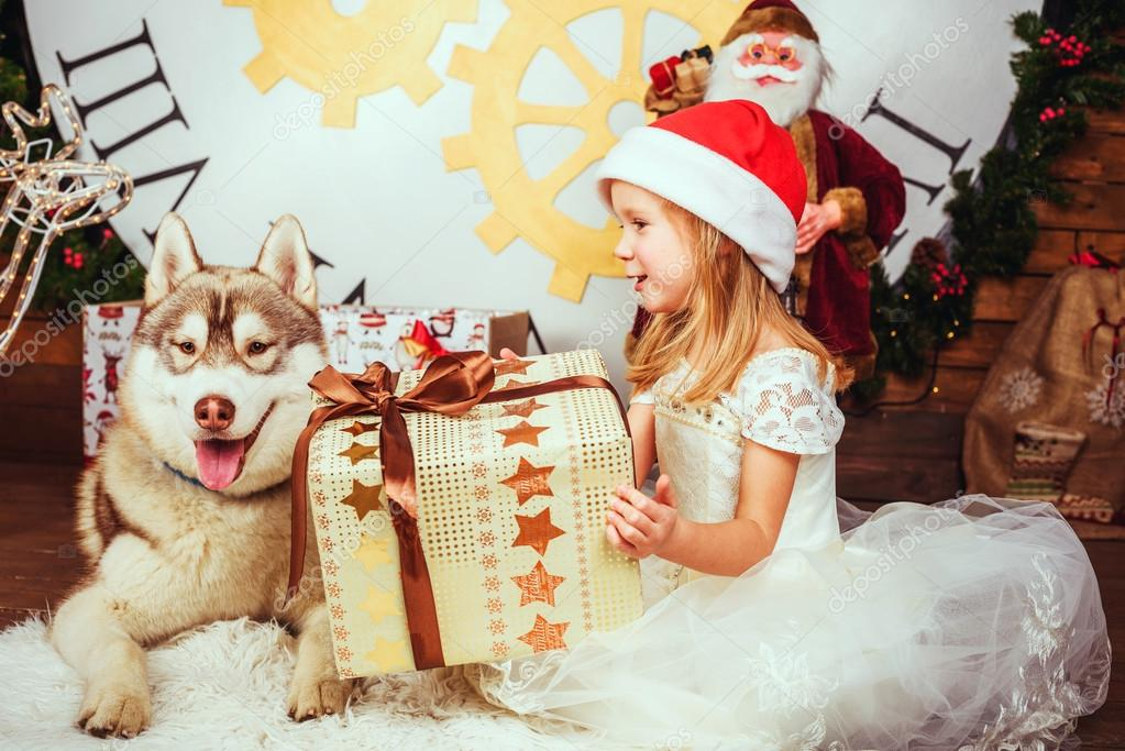 little girl and siberian husky dog playing with presents in christmas decorations stock photo