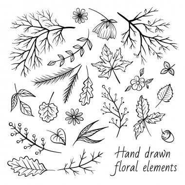 Vector herbal elements set.