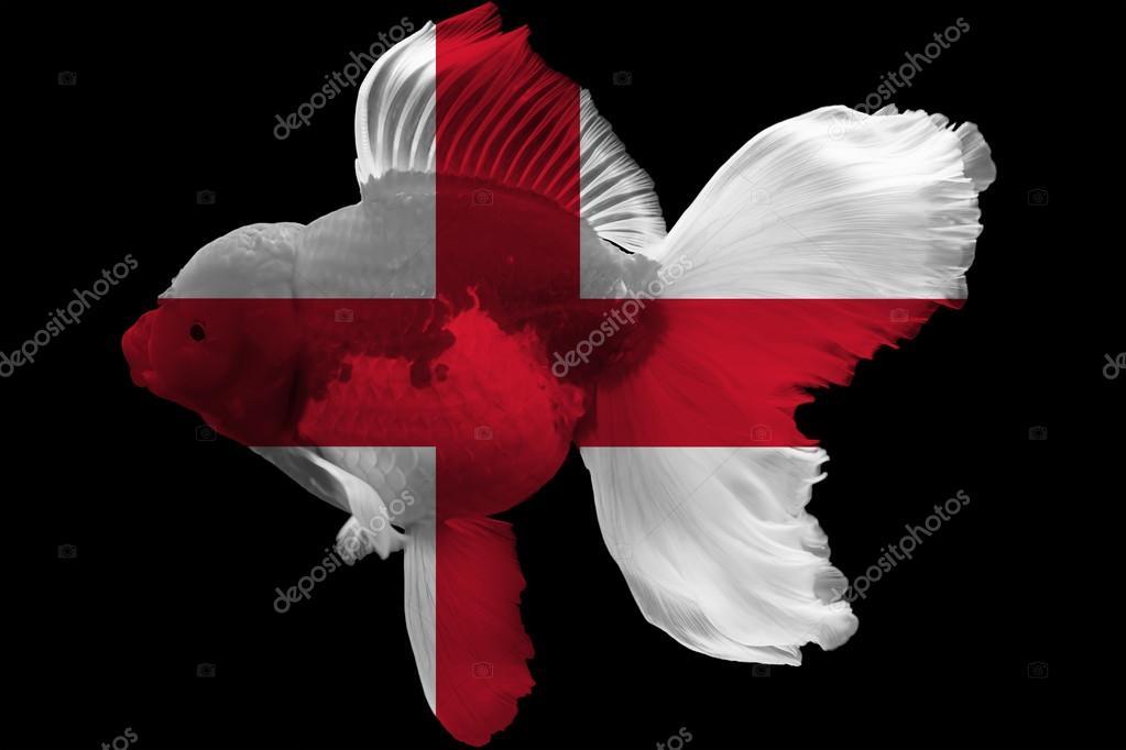 Bandiera Dellinghilterra Il Pesce Rosso Foto Stock Dsom 91165472