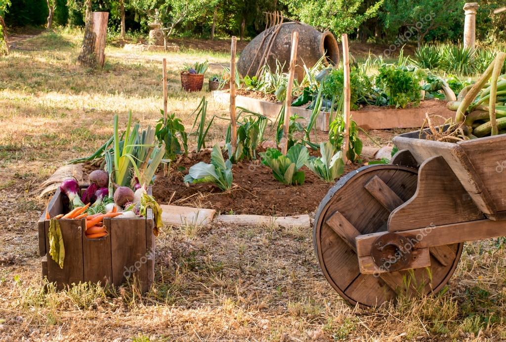 Detail Of A Small And Rustic Vegetable Garden Photo By Cineuno