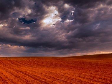 Crop field and stormy sky II