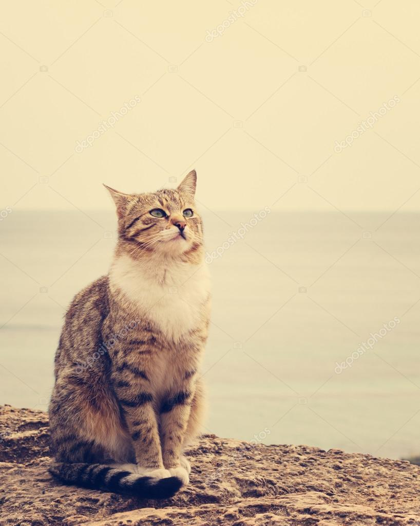 Sad homeless cat sitting on the beach. The image is tinted and s