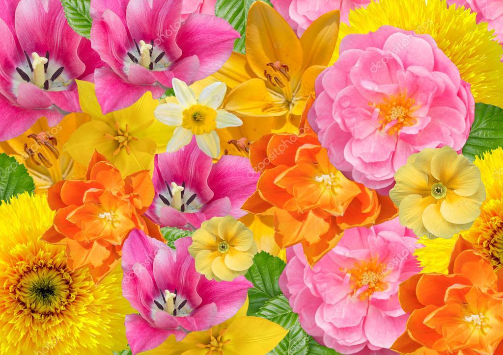 Fondo Tarjetas Con Flores Fondo De Tarjetas Flores En Colores