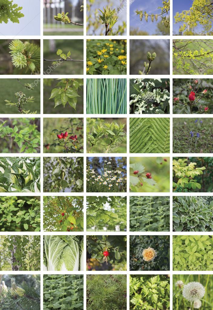Collage natural verde de las plantas, cuarenta elementos, vertical ...
