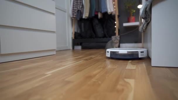Inteligentní technologie pro čištění domácích mazlíčků. Kulatý bílý robot vysavač čistí podlahu, zatímco šedé skotské rovné kotě bezstarostné hraje doma. Malá kočka a robotický vysavač na pokoji