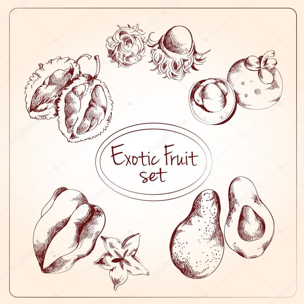 Exotic fruit sketch set clipart vector