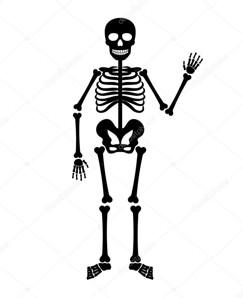 vector halloween black skeleton stock vector - Squelette Halloween
