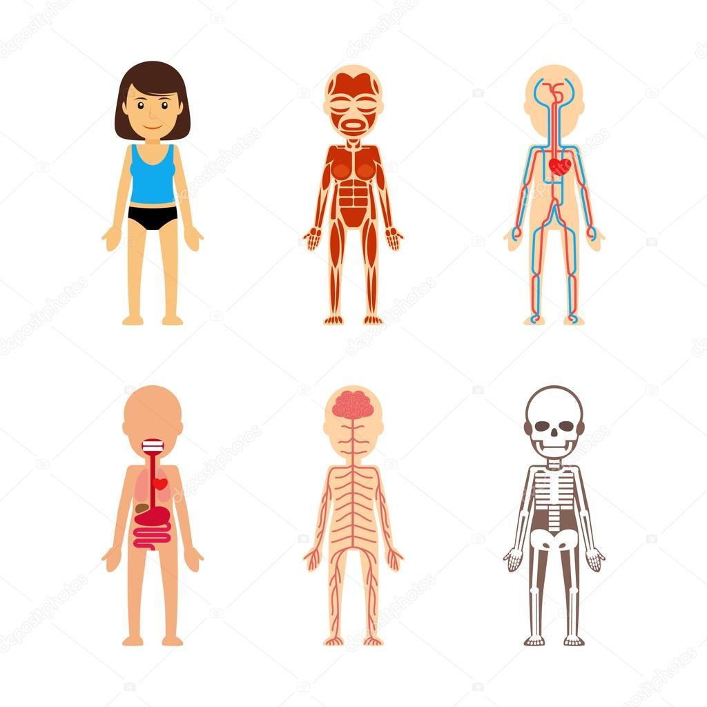 Anatomía del cuerpo de la mujer — Archivo Imágenes Vectoriales ...