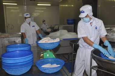 Tien Giang, Vietnam - March 2, 2013: Workers are weighing pangasius fish fillets in a seafood processing plant in Tien Giang, a province in the Mekong delta of Vietnam