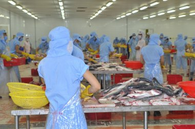 Tien Giang, Vietnam - March 2, 2013: Workers are filleting pangasius fish in a seafood processing plant in Tien Giang, a province in the Mekong delta of Vietnam