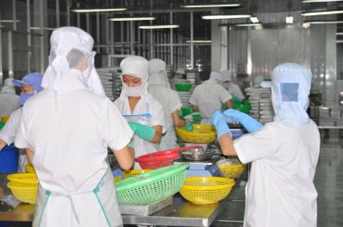 Nha Trang, Vietnam - March 5, 2012: Workers are selecting octopus to put to the freezing machine in a seafood factory in Vietnam