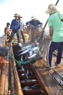 Nha Trang, Vietnam - May 5, 2012: Fishermen are collecting tuna fish caught by trawl nets in the sea of the Nha Trang bay