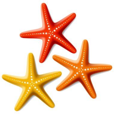 Three Starfishes on white
