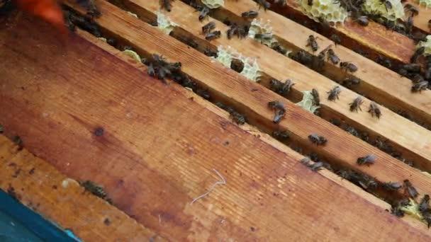 Skupina včel v úlu. Přípravky před houpací medu