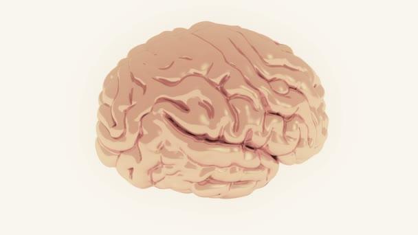 4k otáčení modelu mozku, umělá inteligence.