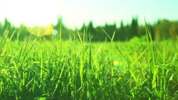 Green grass dolly in