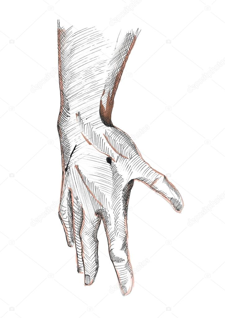 Right human hand: fingers, knuckles, wrist, arm, tense muscles ...