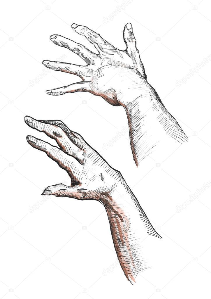 Expresivas manos izquierdas y derecha humanas mostrando flexión los ...