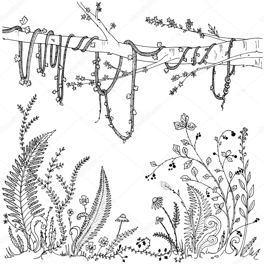 Helechos, flores, vides y berries en un bosque de vegetación densa ...
