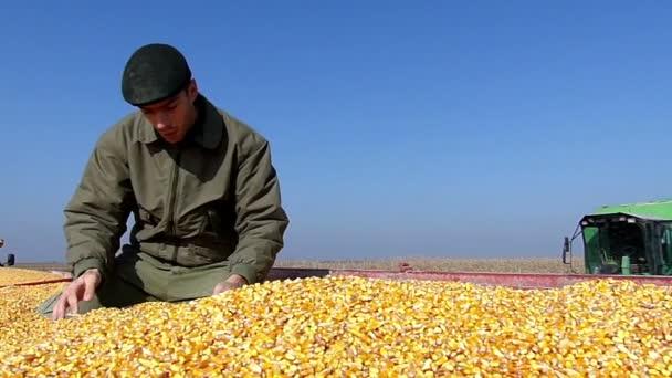 Mladý zemědělec příjmy obilí na poli se těší na slunečné podzimní den