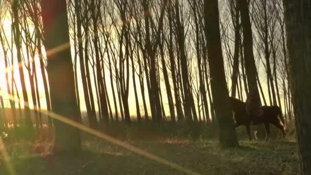 Mladá žena, jízda na koni v lese.