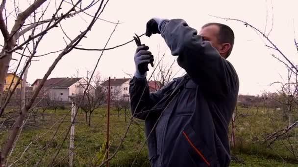 Zahradník, prořezávání ovocných stromů
