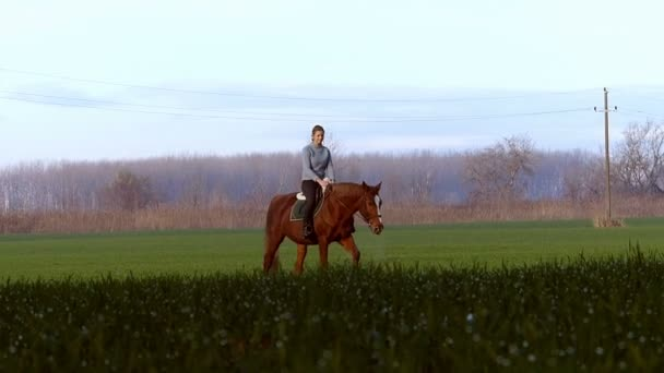 Happy young girl riding a horse on the wheat