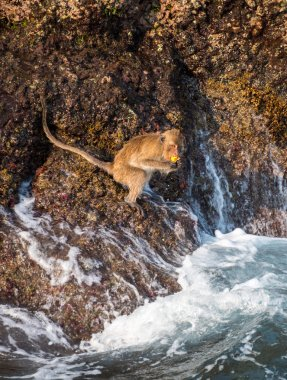 Monkey at the rocks of Thailand