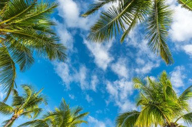Boracay island with coconut palms tree leaves