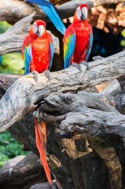 Colorful parrots in safari world, Bangkok