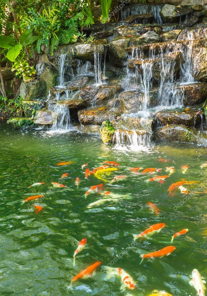 koi carp fish in the pond of Phuket Botanical Garden
