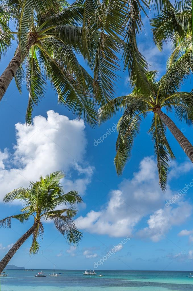 Boracay island with coconut palms