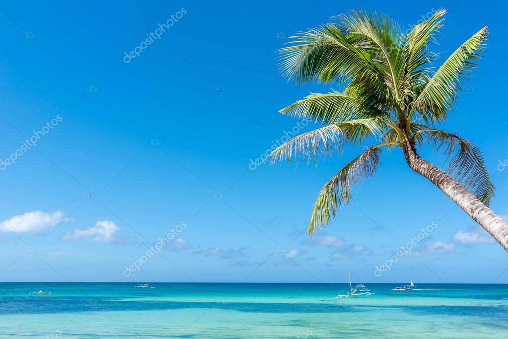 Boracay island with coconut palm