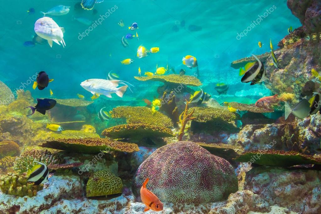 tropical fishes at Rayong aquarium,