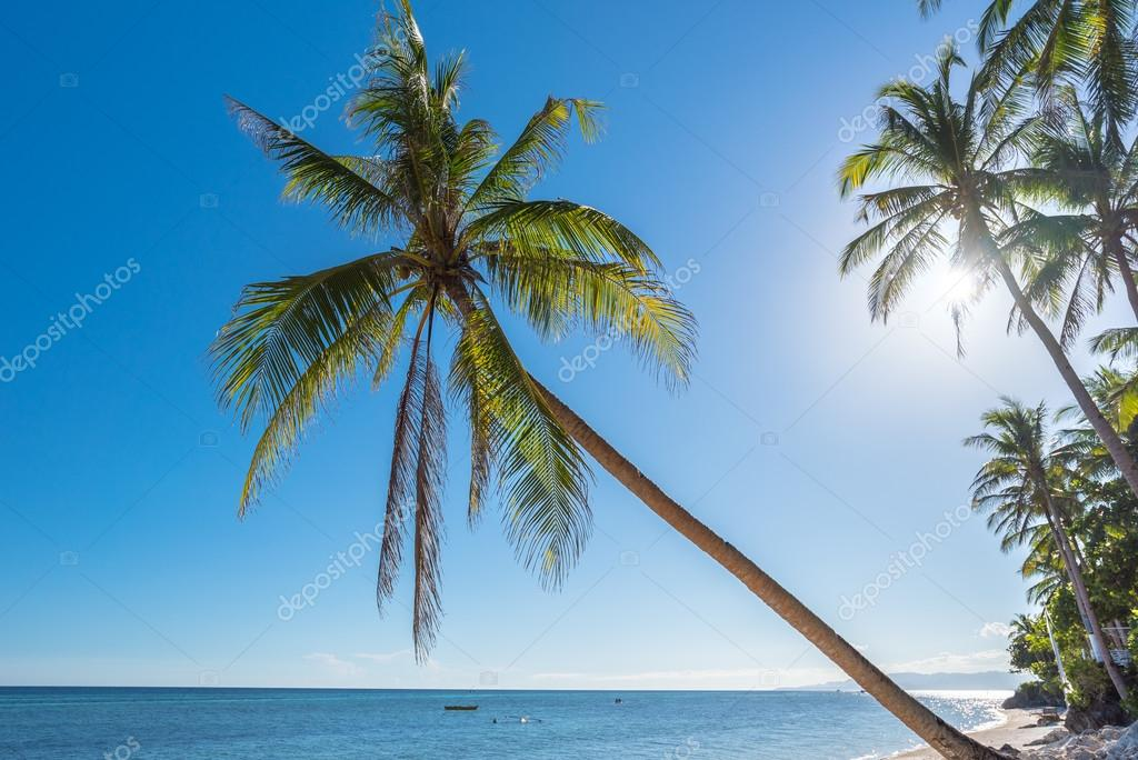 Anda beach Bohol island with coconut palms tree