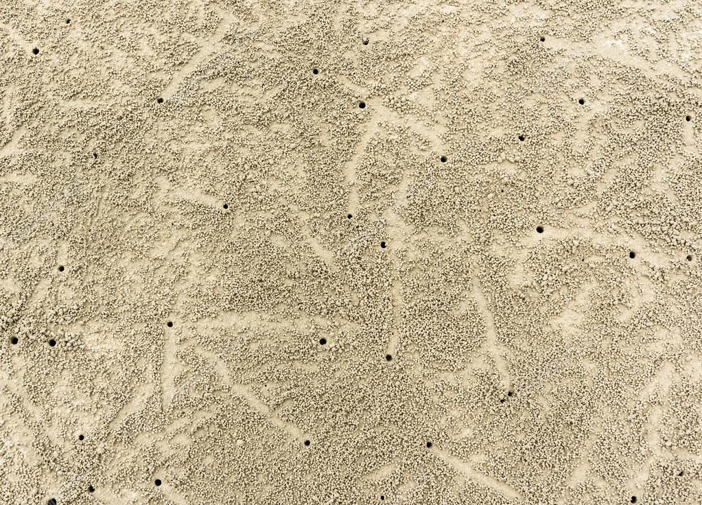 Sandy beach with crab traces.