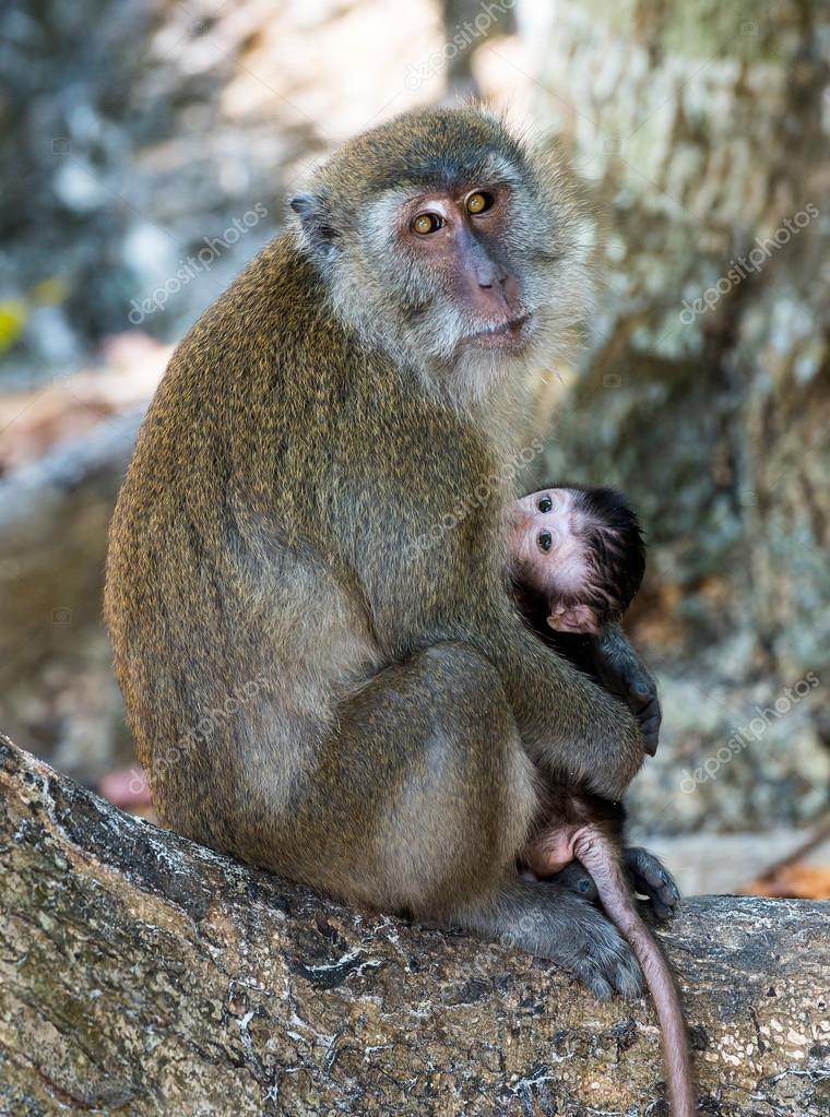 mother monkey holding her baby cub