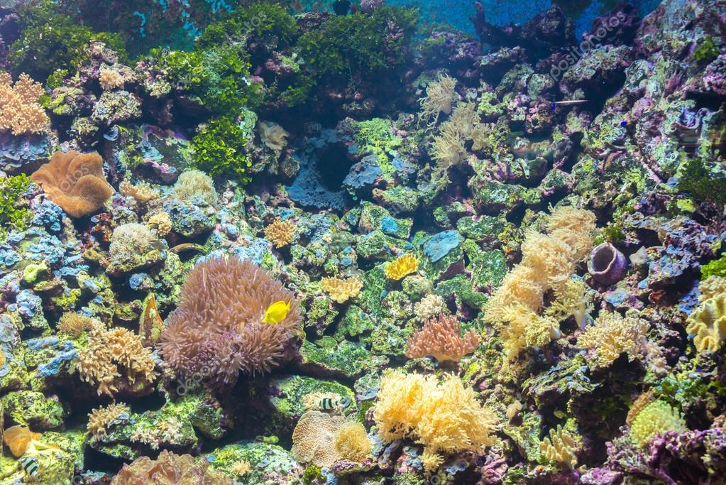 tropical fishes at Rayong aquarium