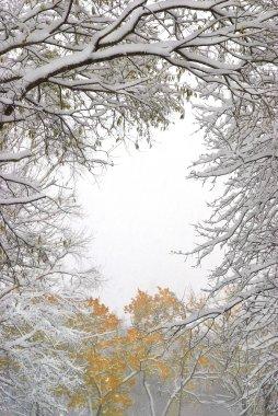 Güzel kışlar sabah